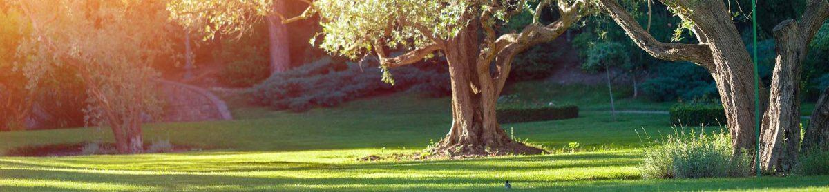 Ark Sprinkler & Landscape